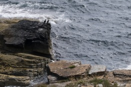 Orkney-7