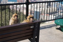 gibraltar-the-rock-7